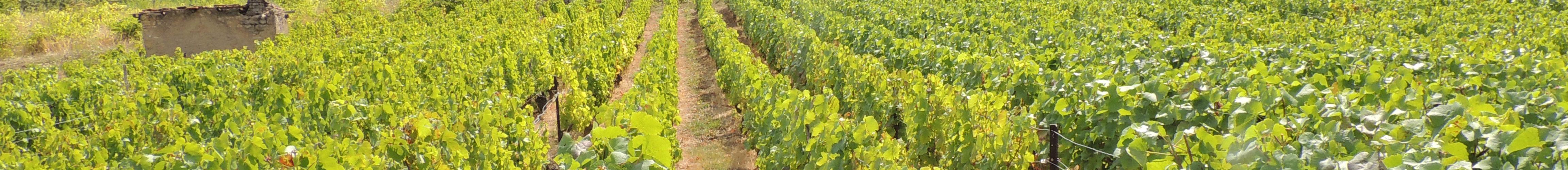 paysage vignoble de Bulligny